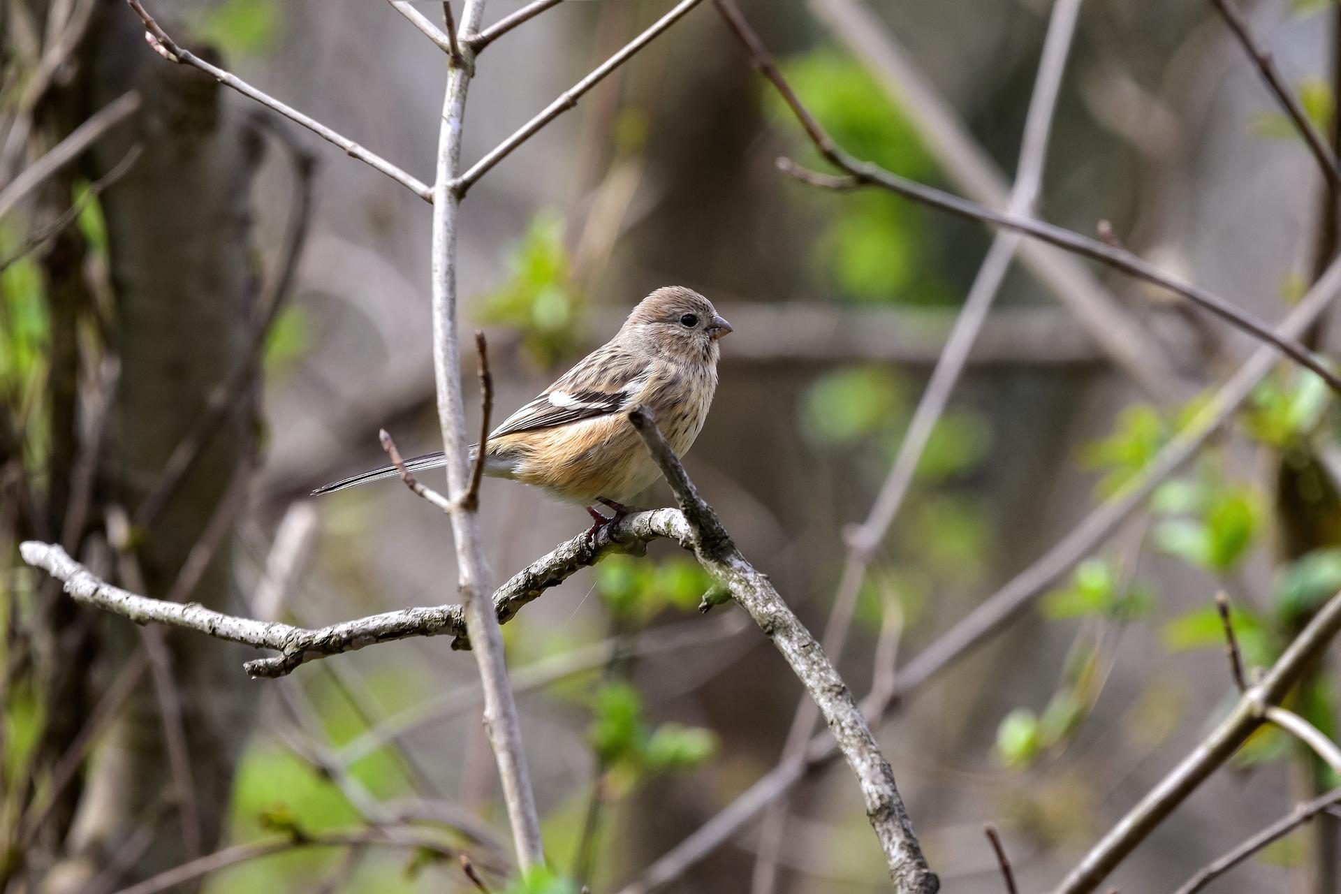Ptice v gozdu prinašajo sprostitev